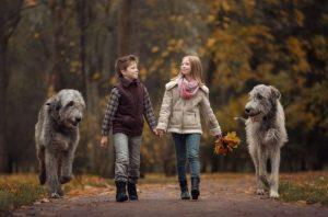 Ирландский волкодав – фото, история и описание породы собак