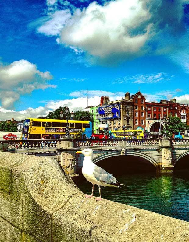 Дублинская чайка.